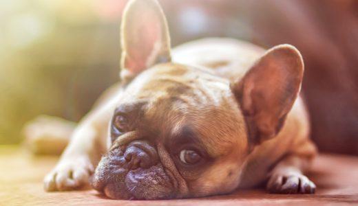 夢占いで犬の夢の意味!犬に噛まれる夢、犬を飼う夢など