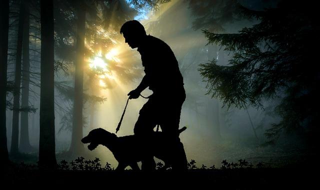 犬に助けられる夢