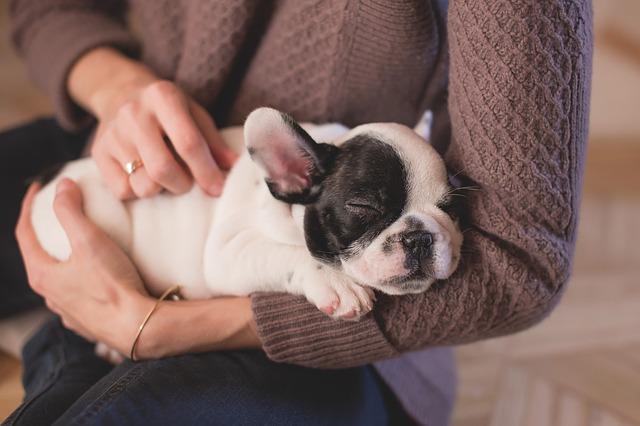 犬を撫でる夢