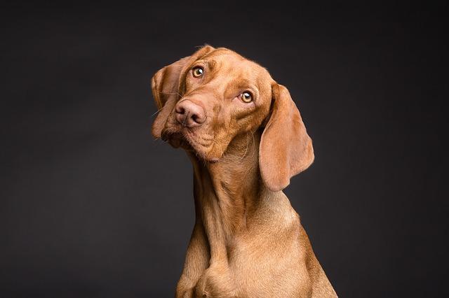 茶色い犬 夢