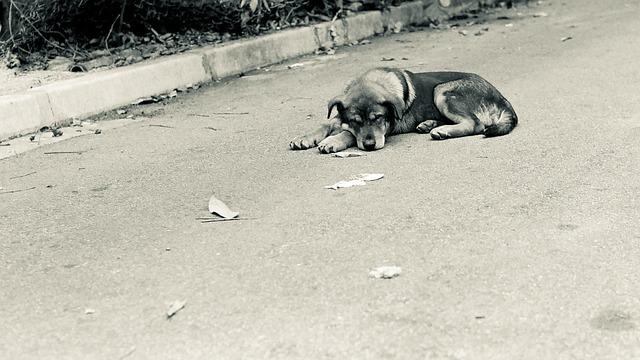 野良犬 夢
