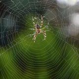 夢 占い 蜘蛛