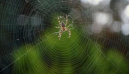 【夢占いで蜘蛛の夢の意味】要注意な可能性大
