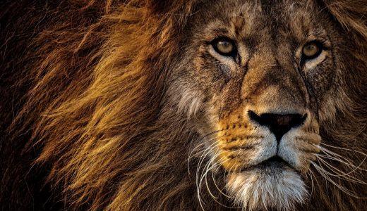 夢占いでライオンの夢の意味【29パターンを解説】
