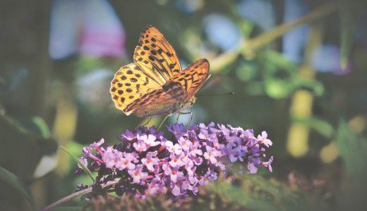 夢占いで蝶の夢が意味するもの20