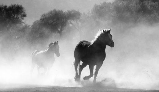 夢占いで馬が出てくる夢【その意味や心理とは?】
