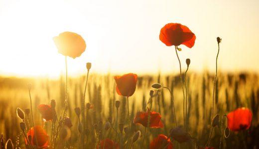 夢占いで花の夢の意味【恋愛の暗示が多め】
