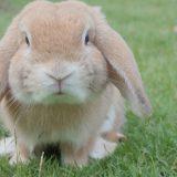 夢占い ウサギ