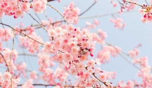 夢占いで桜の夢の意味【実は要注意です】