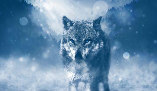 夢占いで狼の夢の意味【危険が迫っている予兆】