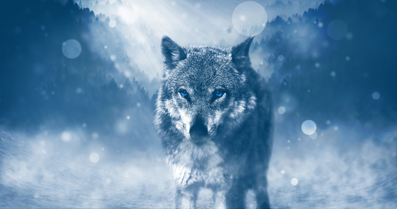 夢占い 狼