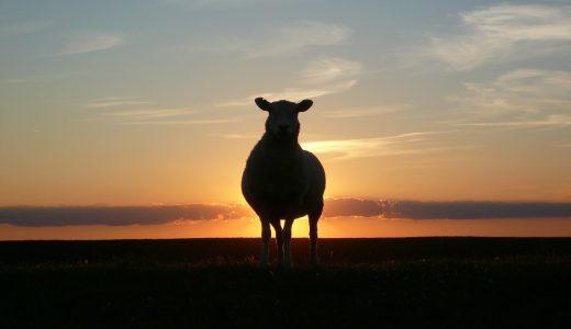 夢占いで羊の夢【その意味や心理とは?】