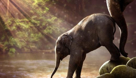 夢占いで象の夢が示す意味や心理とは?