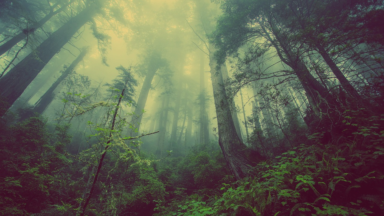 夢占い 霧