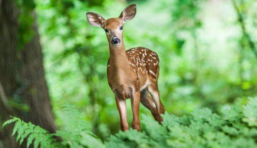 夢占いで鹿の夢【その意味や心理とは?】
