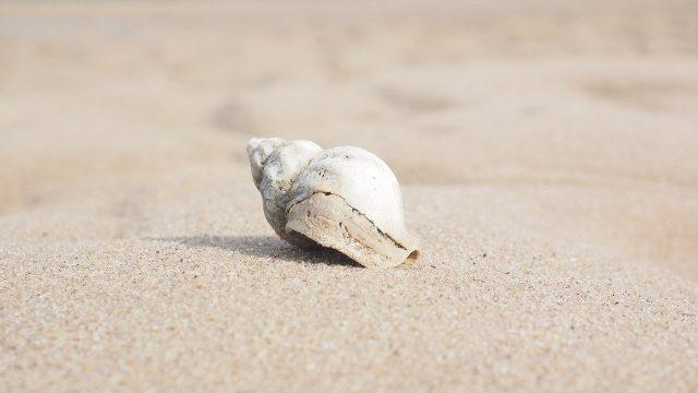 夢占い 貝